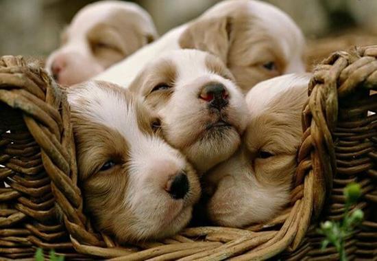 Alimentación para Cachorros recién Nacidos