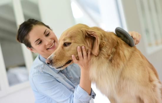 Caída del pelo en perros causas y tratamiento